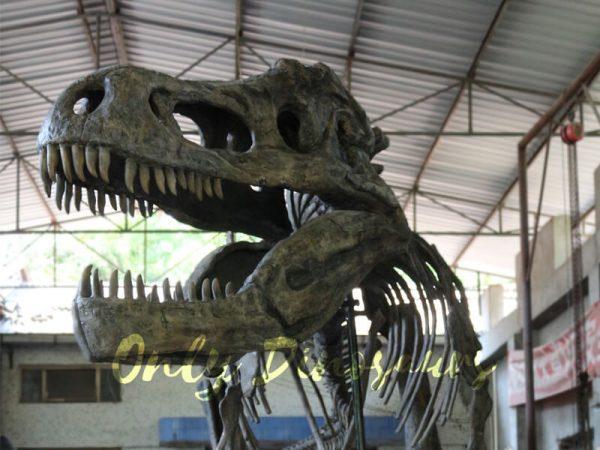 Giant-Tyrannosaurus-Rex-Skeleton-for-Museum4