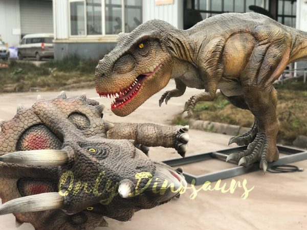 Life-Size-T-rex-Dinosaur-Hunted-Triceratops4