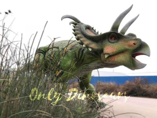 Life-size-Albertaceratops-Animatronic-Dinosaur-Model6
