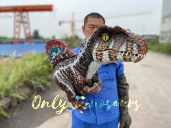 Lifelike-Dinosaur-Spinosaurus-Puppet-for-Sale5