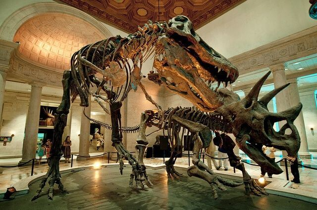 Natural-History-Museum-of-Los-Angeles-County