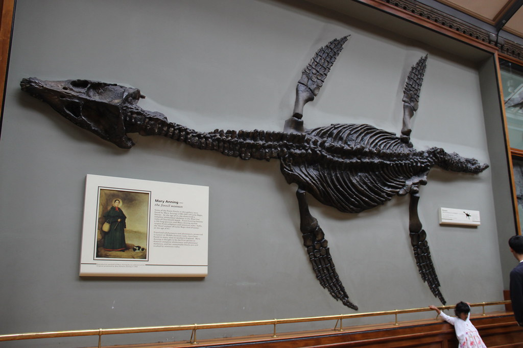 mary-anning