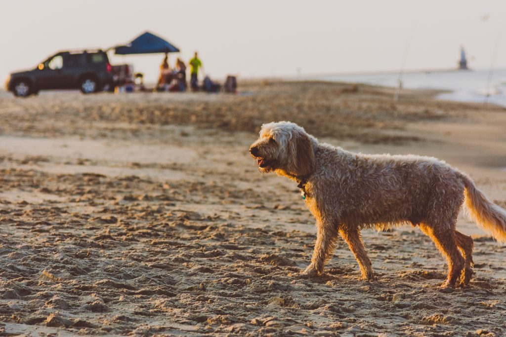 18-Best-Places-to-Travel-in-July-Destinations-in-the-U.S.-Dog-on-the-Beach