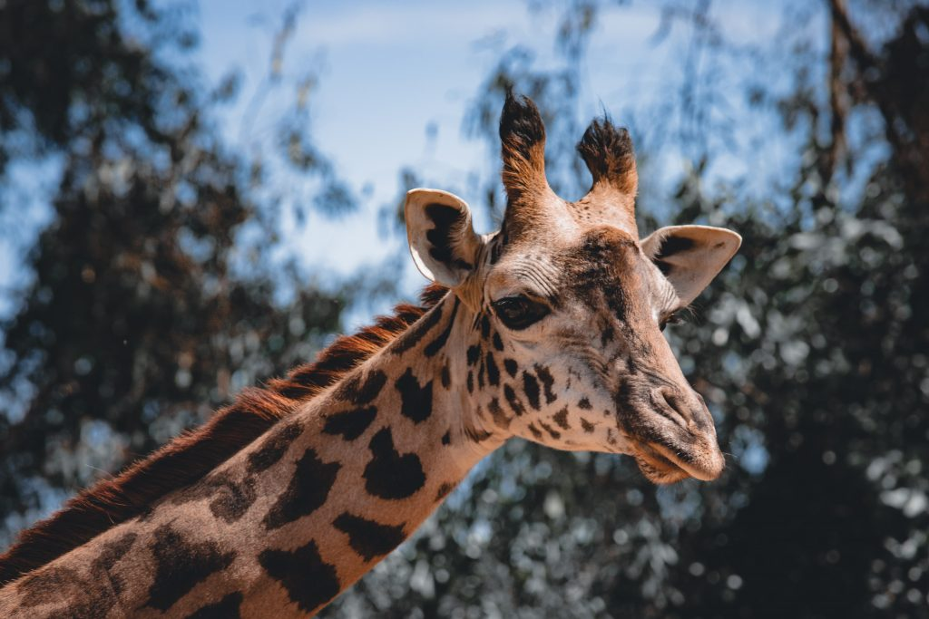 18-Best-Places-to-Travel-in-July-Destinations-in-the-U.S.-Giraffe