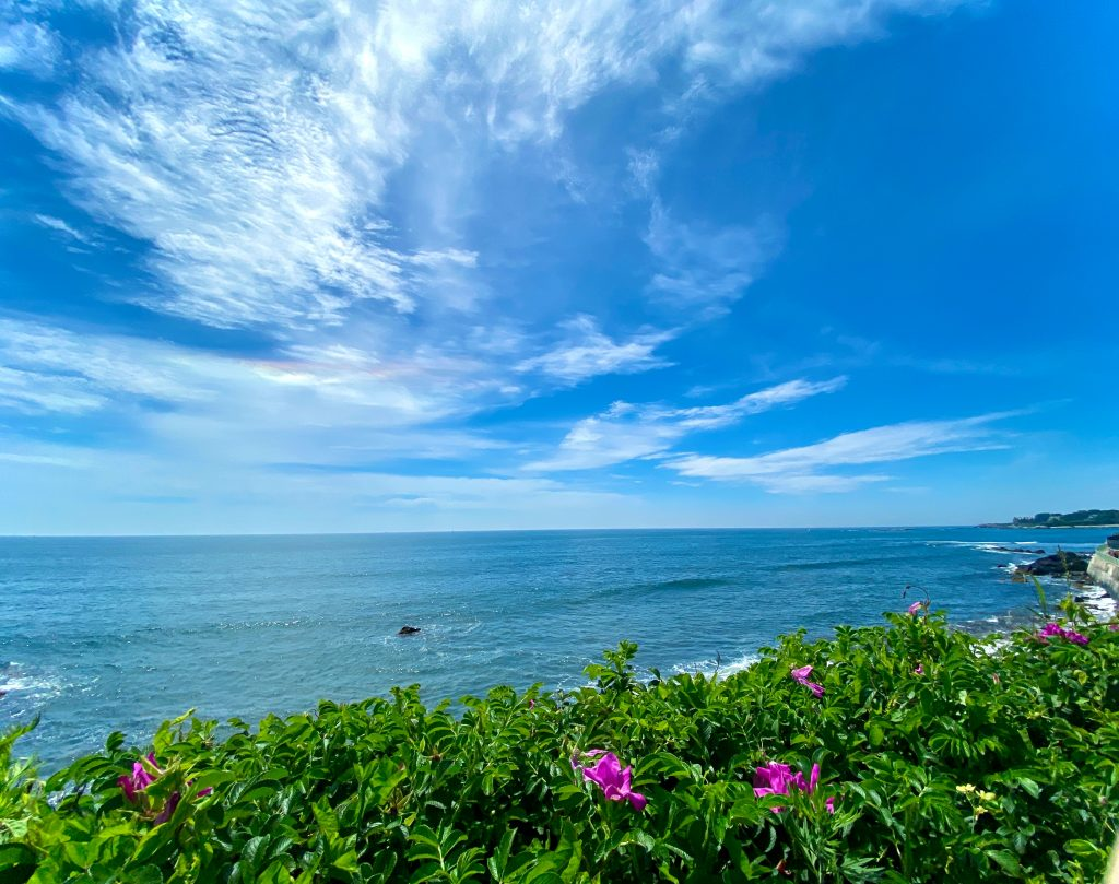18-Best-Places-to-Travel-in-July-Destinations-in-the-U.S.-Plants-Beside-the-Beach