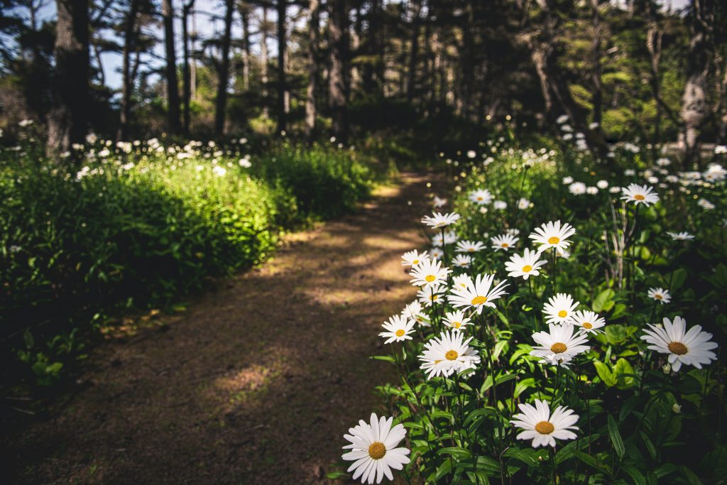 18-Fun-Workouts-to-Get-You-Unstuck-Motivated-in-Life-Trail-with-Flowers