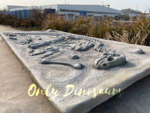 Lifelike Dinosaur Skeleton Fossil Dig Prop