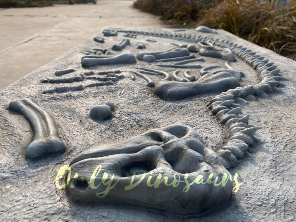 Lifelike-Dinosaur-Skeleton-Fossil-Dig-Prop6