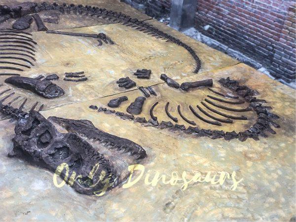 Lifesize-Dinosaur-Fossil-Replica-for-Sale2
