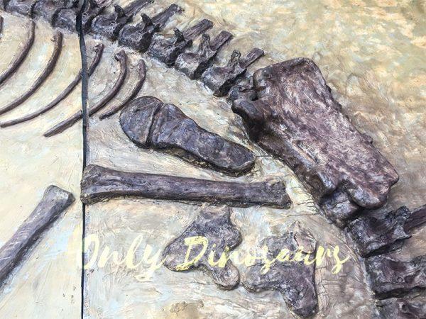 Lifesize-Dinosaur-Fossil-Replica-for-Sale4