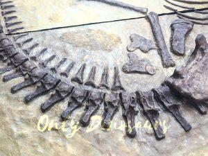 Lifesize Dinosaur Fossil Replica for Sale