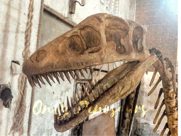 Realistic-Dinosaur-Skeleton-for-Museum2