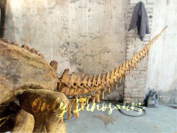 Realistic-Dinosaur-Skeleton-for-Museum5