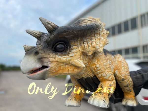 Realistic-False-Arm-Baby-Triceratops-Dino-Puppet4