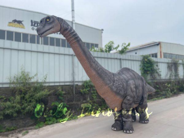 Realistic-Two-person-Brontosaurus-Dinosaur-Costume4