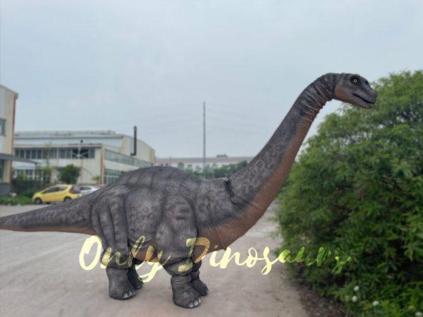 Realistic-Two-person-Brontosaurus-Dinosaur-Costume6
