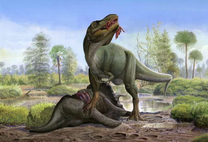 A Tyrannosaurus Rex eats the carrion of a dead Triceratops in prehistoric wetlands.