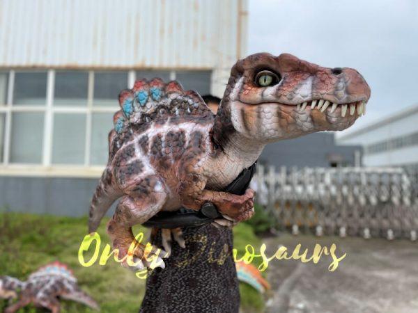 Adorable-Baby-Spinosaurus-False-Arm-Puppet3