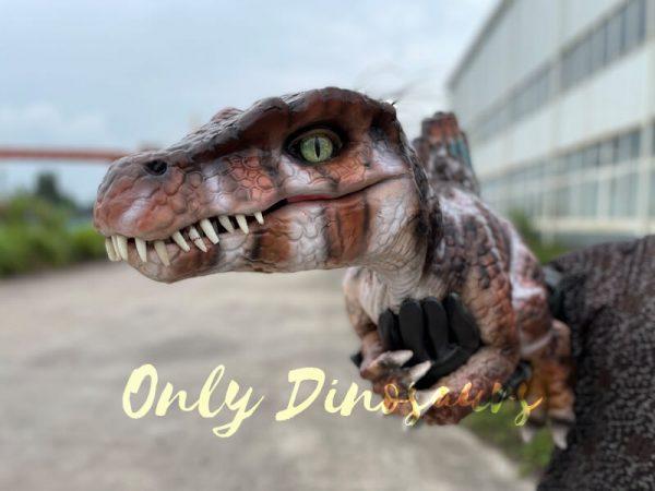 Adorable-Baby-Spinosaurus-False-Arm-Puppet4