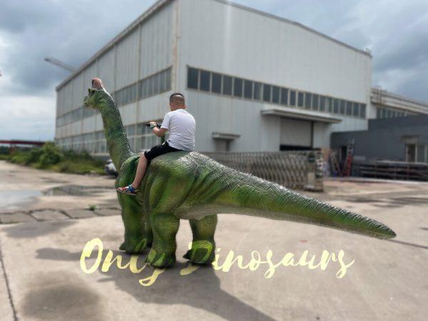 Animatronic-Brachiosaurus-Walking-Dinosaur-Ride2