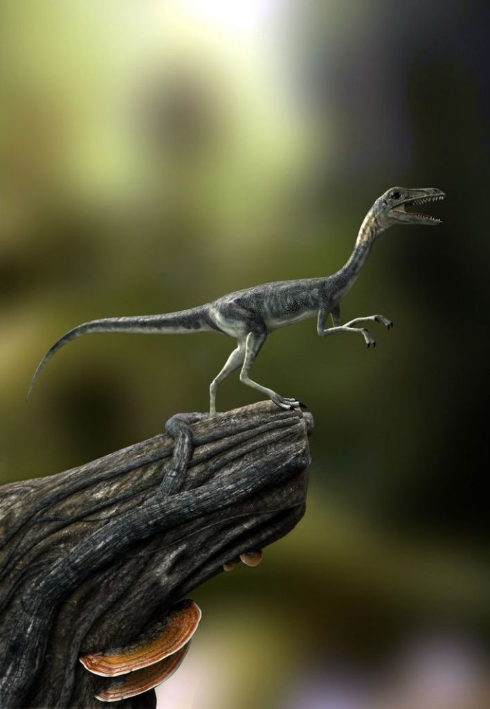 A Small Dinosaur in a Glommy Background