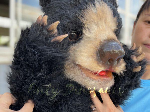 A Cute Baby Black Bear