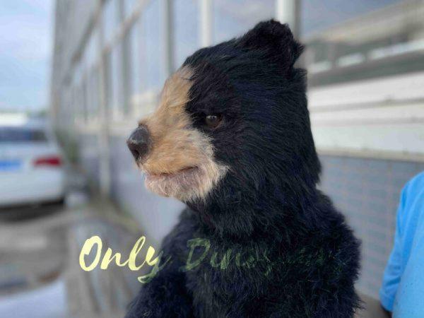 The Head of a Cute Baby Black Bear