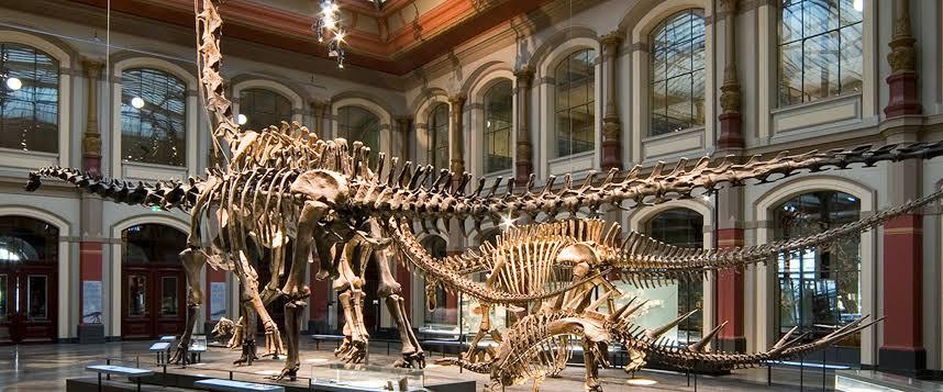 Dinosaur-Fossils-in-Berlin-Museum