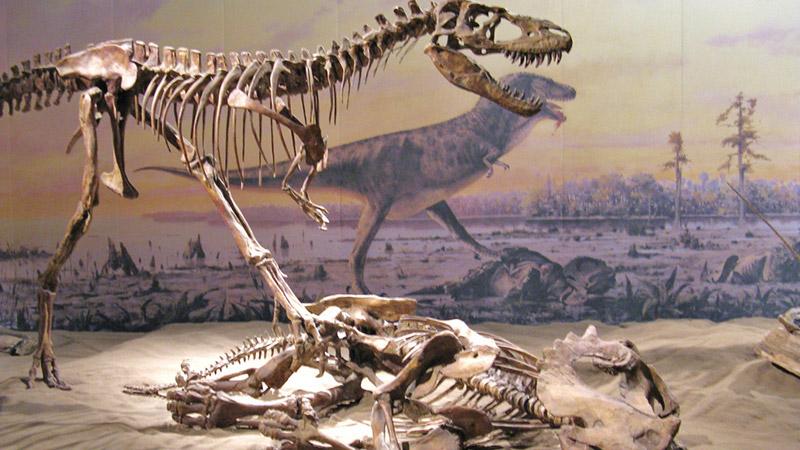 Dinosaur-Fossils-in-Dinosaur-Provincial-Park