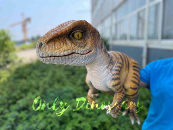 A Brown Baby Velociraptor with Black Stripes