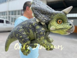 False Arm Realistic Baby Triceratops Puppet