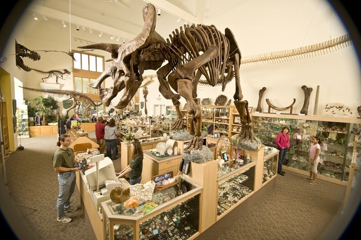 Fossils-in-Dinosaur-State-Park