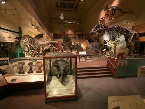 Fossils-in-Smithsonian-National-Museum-of-Natural-History