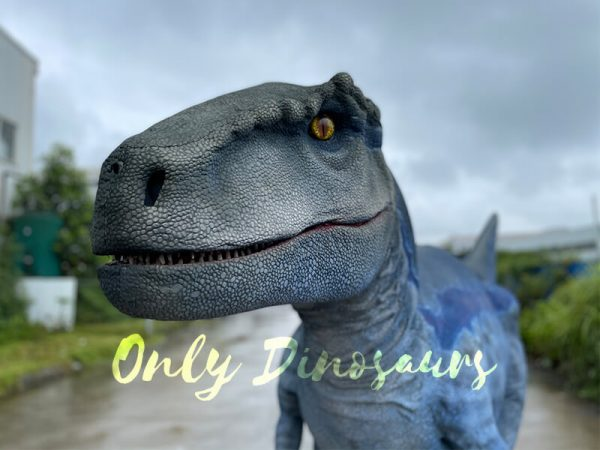 The Head of a Blue Raptor