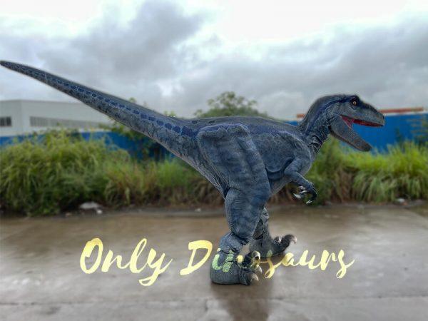 A Roaring Blue Raptor Walking on the Road