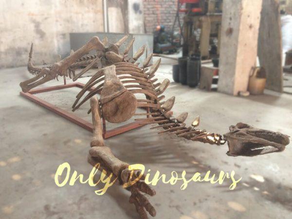 Realistic-Dinosaur-Stegosaurus-Bone-for-Exhibits1