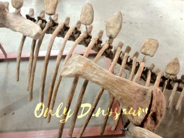 Realistic-Dinosaur-Stegosaurus-Bone-for-Exhibits4