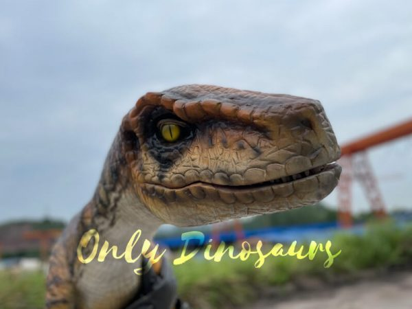 Realistic-False-Arm-Raptor-Shoulder-Puppet2