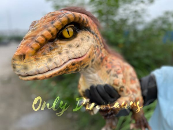 Realistic-Feathered-Raptor-False-Arm-Puppet3