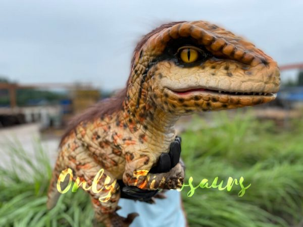 Realistic-Feathered-Raptor-False-Arm-Puppet4