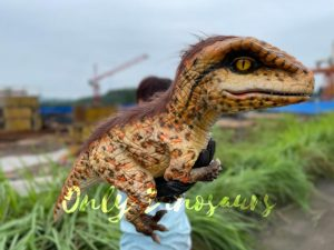 Realistic-Feathered-Raptor-False-Arm-Puppet5