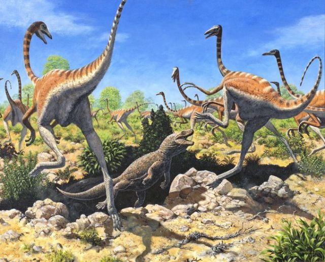 Several Ornithomimus