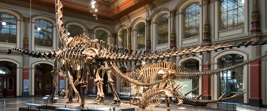 Top-12-Best-Day-Trips-for-Dinosaur-Lovers-Berlin