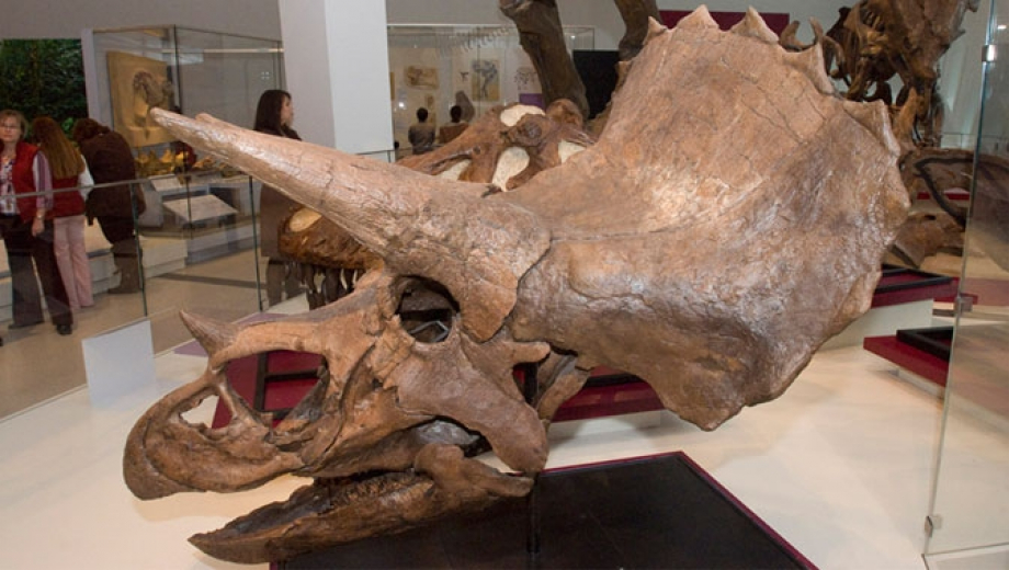 Top-12-Best-Day-Trips-for-Dinosaur-Lovers-Royal-Museum-Ontario