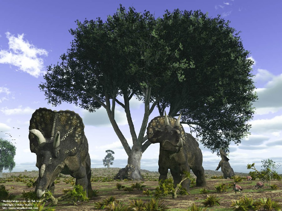Top-12-Best-Day-Trips-for-Dinosaur-Lovers-Two-Nedoceratops-Are-Finding-Food