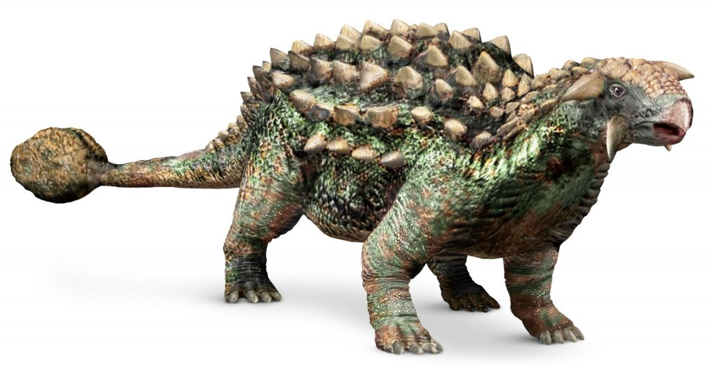 Top-15-Coolest-Dinosaurs-to-Ever-Lived-on-Earth-Ankylosaurus