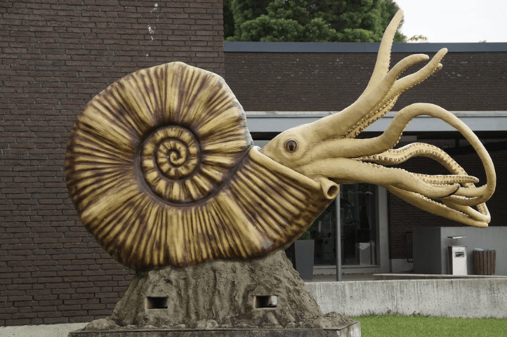 Top-15-Popular-Fossil-and-Dinosaur-Pokemons-That-You-Will-Like-Ammonites-1