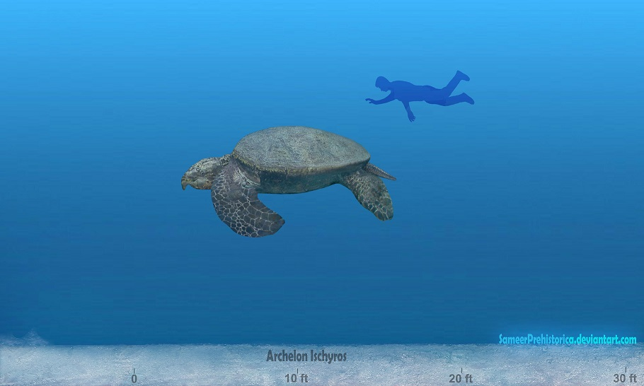 Top-15-Popular-Fossil-and-Dinosaur-Pokemons-That-You-Will-Like-Archelon