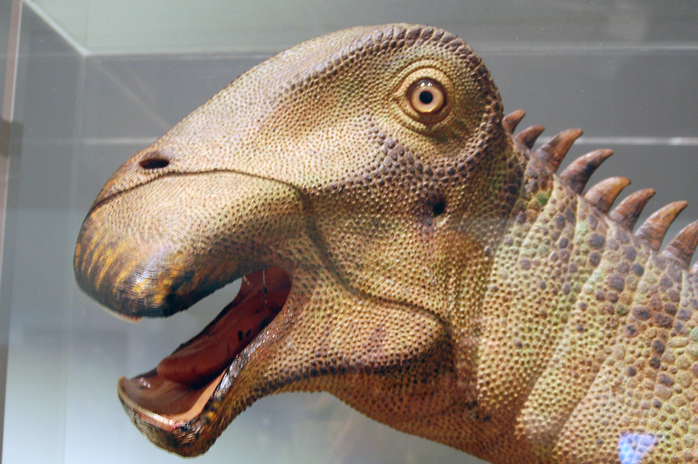 a flat mouthed yellow dinosaur