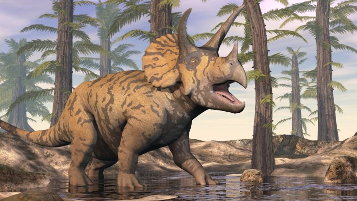 A Spotted Triceratops in the Forest